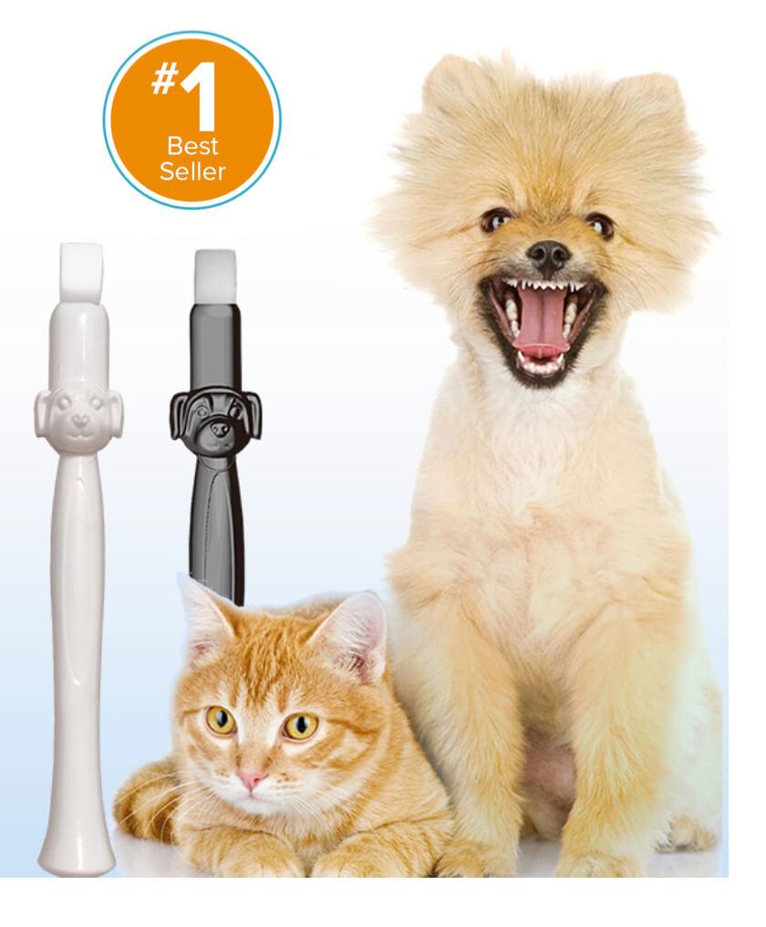 tandenborstel hond